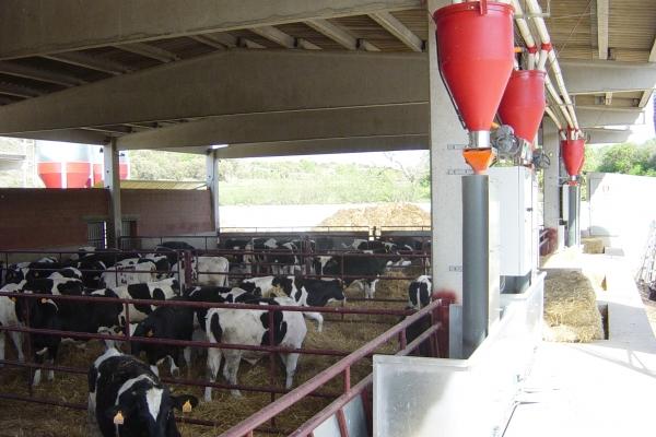 crg-control-rendimientos-en-granjas-de-vacuno2